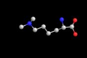 JBS Methylation Kit