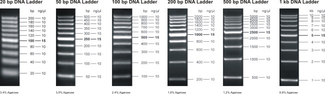 Fluorescent Log Scale Dna Ladders Jena Bioscience