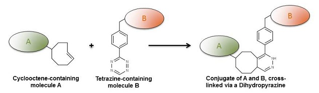 Alkene-Tetrazine Click Chemistry Reaction