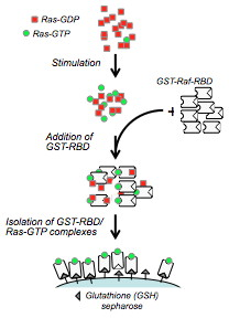 GTPase Activation Kits