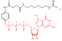 Immobilized gamma-Aminophenyl-m7GTP (C10-spacer)