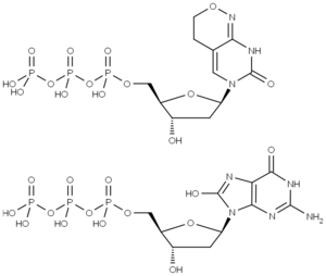 Fig. 1: Structures of dPTP and 8-Oxo-dGTP