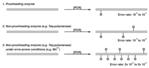 Enhanced mutational rate by error-prone PCR compared to standard PCR reactions.