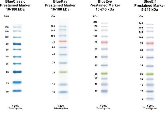 Prestained Protein Mw Marker Jena Bioscience