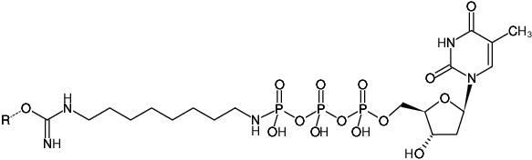 Structural formula of Immobilized γ-Amino-octyl-dTTP (γ-Amino-octyl-dTTP-Agarose)