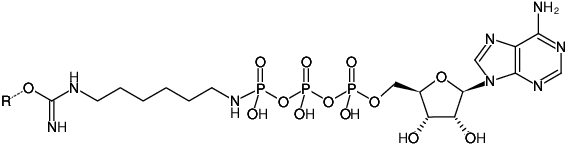 Structural formula of Immobilized γ-Amino-hexyl-ATP (γ-Amino-hexyl-ATP-Agarose)