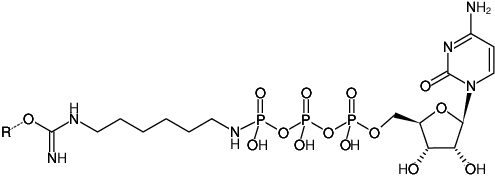 Structural formula of Immobilized γ-Amino-hexyl-CTP (γ-Amino-hexyl-CTP-Agarose)