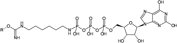 Structural formula of Immobilized γ-Amino-hexyl-XTP (γ-Amino-hexyl-XTP-Agarose)