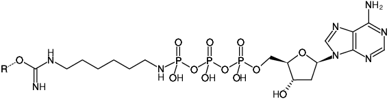 Structural formula of Immobilized γ-Amino-hexyl-dATP (γ-Amino-hexyl-dATP-Agarose)