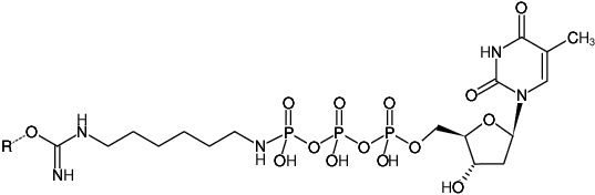 Structural formula of Immobilized γ-Amino-hexyl-dTTP (γ-Amino-hexyl-dTTP-Agarose)