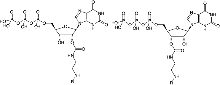 Structural formula of Immobilized 2'/3'-EDA-XTP (2'/3'-EDA-XTP-Agarose)