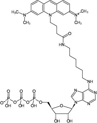 Structural formula of N6-(6-Aminohexyl)-ATP-ATTO-495 (N6-(6-Aminohexyl)-adenosine-5'-triphosphate, labeled with ATTO 495, Triethylammonium salt)