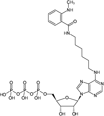 Structural formula of N6-(6-Aminohexyl)-ATP-MANT (N6-(6-Aminohexyl)-adenosine-5'-triphosphate, labeled with MANT, Triethylammonium salt)