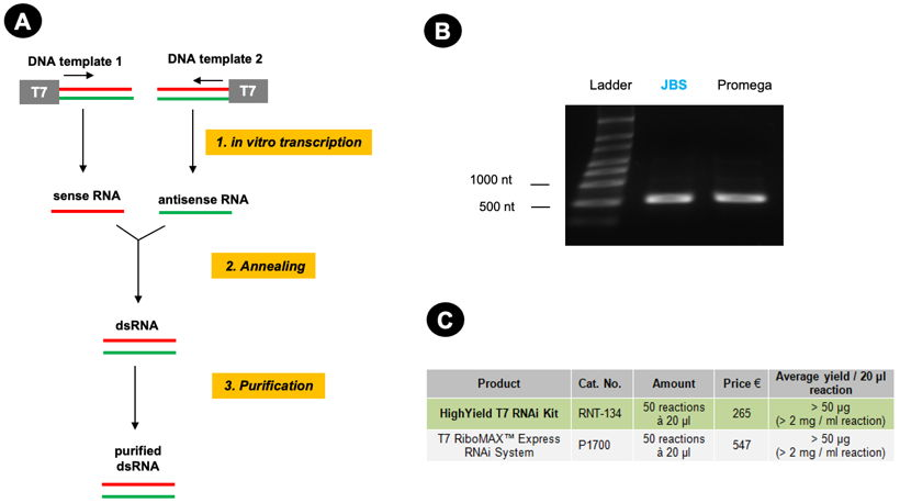 Figure 1: Similar results with Jena Bioscience's HighYield T7 RNAi Kit and the T7 RiboMAX™ Express RNAi System.