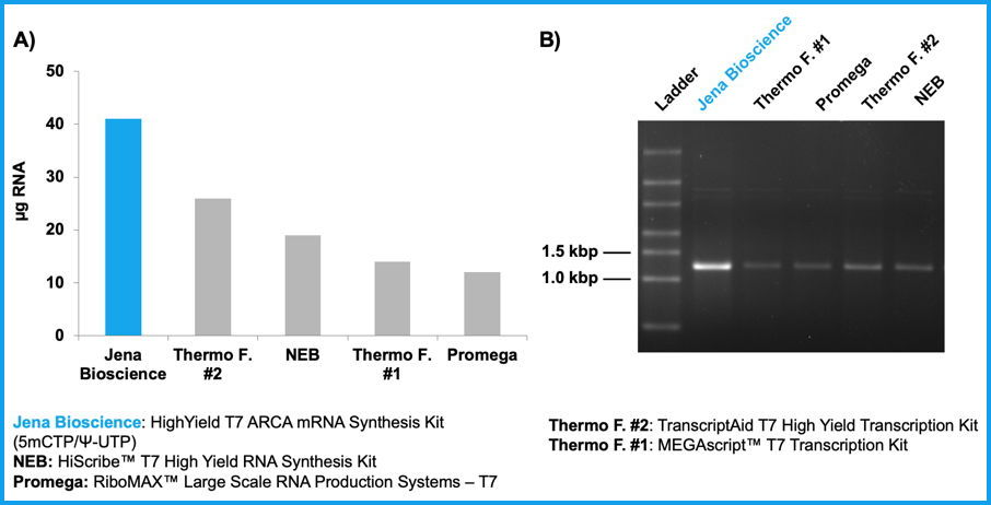 Figure 1: High yields of ARCA-, 5-methylcytidine- & pseudouridine-modified RNA are synthesized within 30 min using HighYield T7 ARCA mRNA Synthesis Kit (5mCTP/Ψ-UTP).