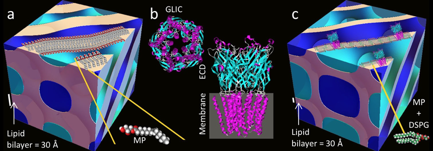 Figure from [1], used courtesy of Prof. Raffaele Mezzenga, ETH Zurich Normal vs. swollen mesophases and the GLIC protein structure.