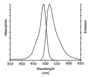Excitation and Emission spectrum of 5/6-FAM