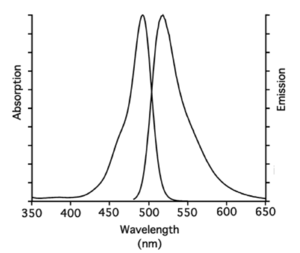 excitation and emission spectrum of 5-FAM