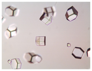 Lysozyme crystals grown in the presence of 8 % w/v Sodium Chloride and 100 mM Sodium Acetate pH 4.2.