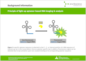 Preview  Principle of light-up aptamer-based RNA imaging